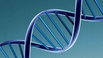 DNA-model